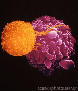 Immune system fighting cancer cell